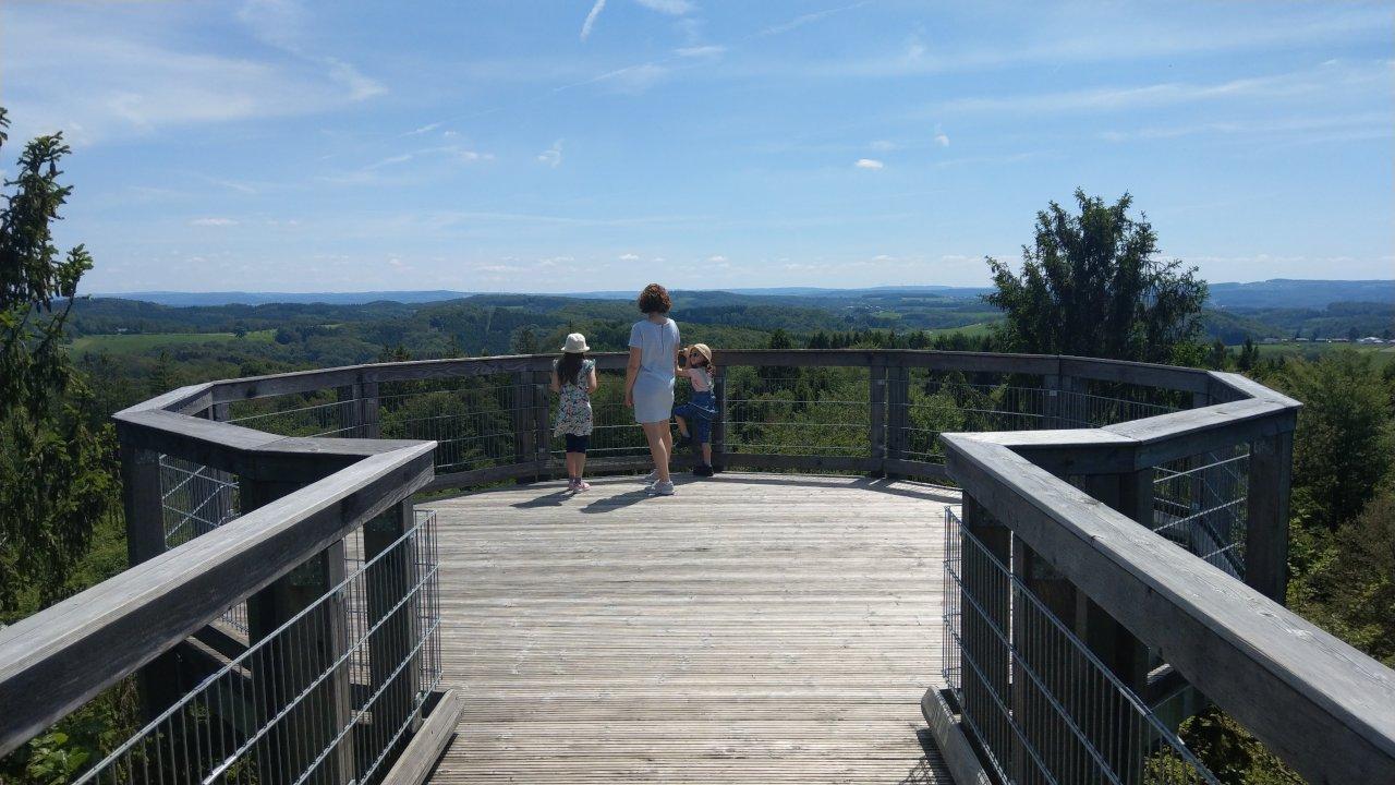 Hoch oben im Baumwipfelpfad – Ein Ausflugstipp für die ganze Familie